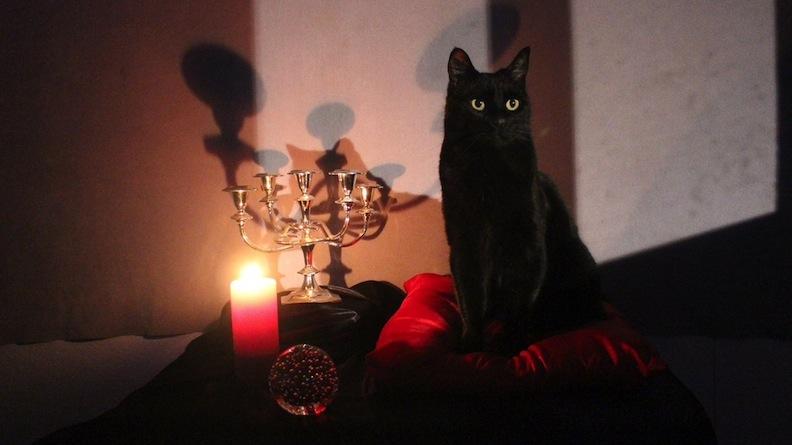 Brand-new Salem the cat on Netflix